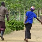 bananas and mango Uganda